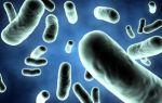 Инфекции, передающиеся половым путем: их виды, возбудители