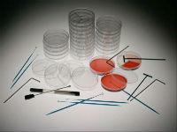 Стафилококк в крови: диагностика и принципы лечения
