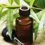 Масло чайного дерева от грибка ногтей на ногах и его применение